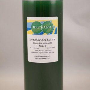 Fresh and Living Spirulina platensis algae start culture (500 ml) for the home growing of Spirulina – Spirulina culture starter